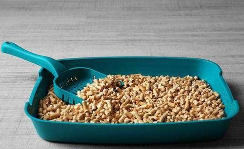 用过的猫砂属于什么垃圾分类?(水晶、松木、豆腐和纸砂猫砂的处理方式)