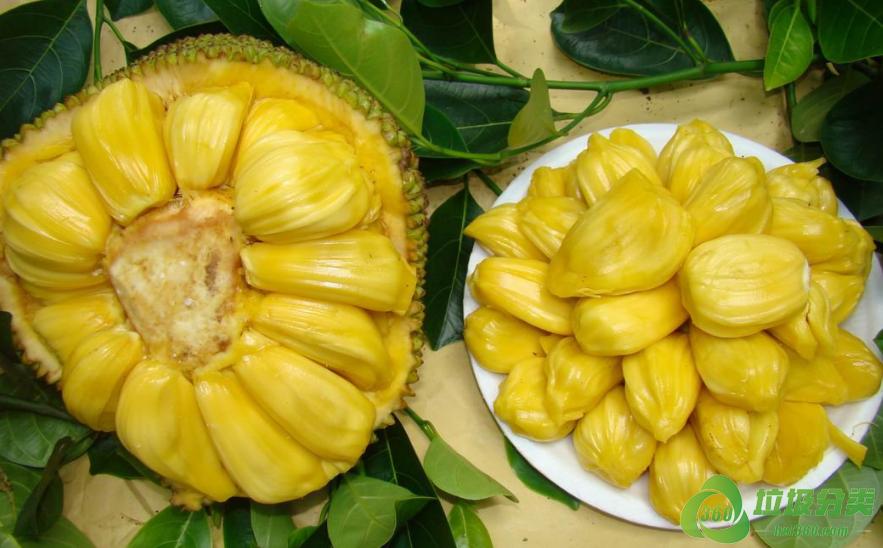 菠萝蜜皮和菠萝蜜籽属于什么垃圾分类?