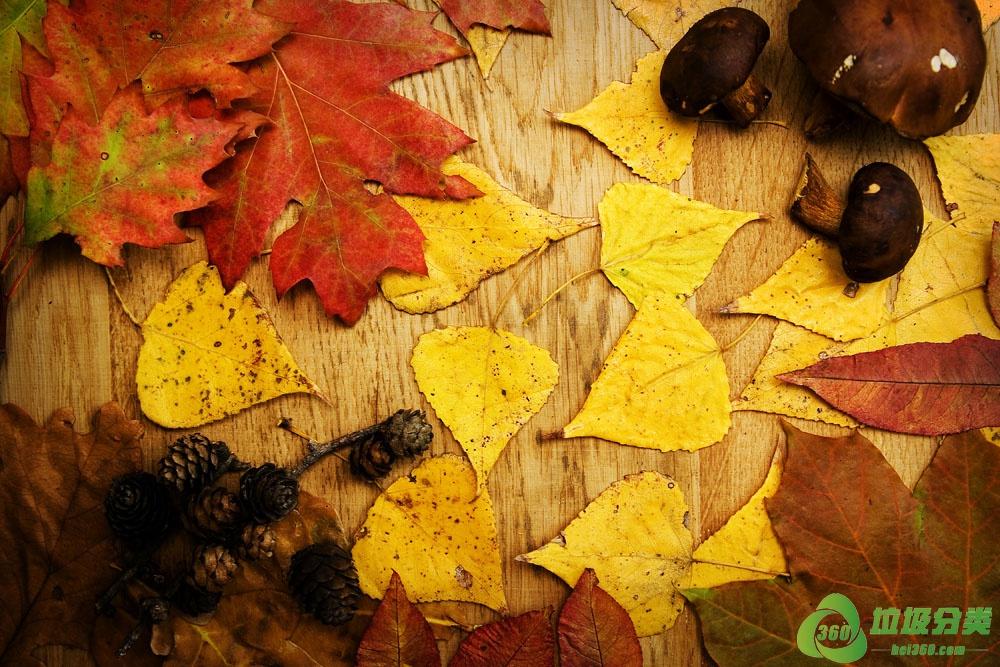 树叶属于什么垃圾分类?