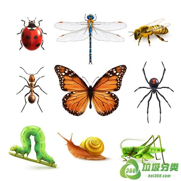 虫子属于什么垃圾分类?