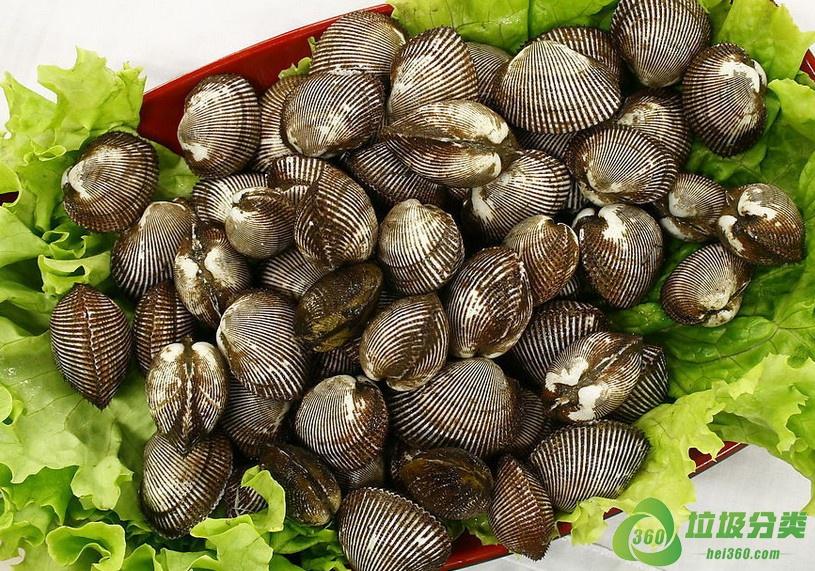 毛蚶壳属于什么垃圾分类?