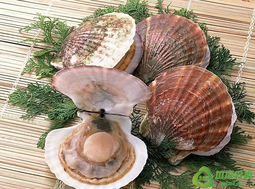 扇贝壳属于什么垃圾分类?