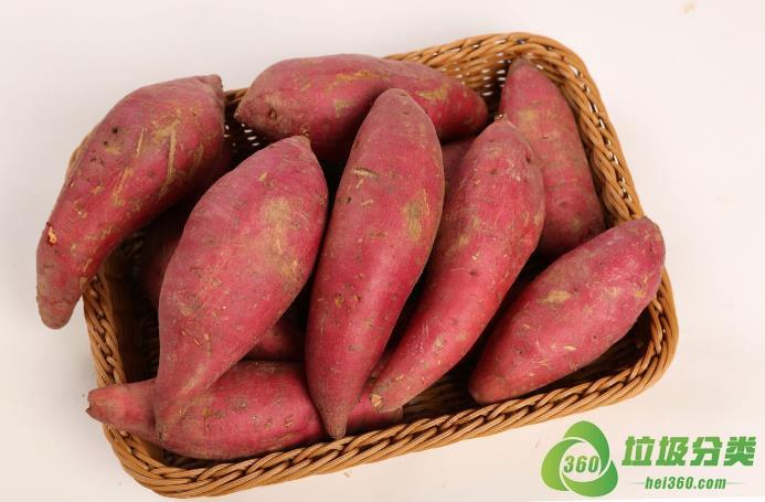 番薯(白薯、地瓜、红薯)属于什么垃圾分类?