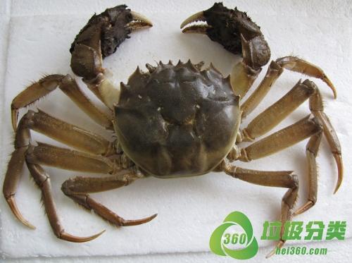 中华绒螯蟹(河蟹、毛蟹、清水蟹、大闸蟹、螃蟹)属于什么垃圾分类?